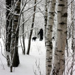 Stock Photo: Walk in winter wood