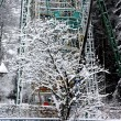Snow-covered tree and ferris wheel — Stockfoto