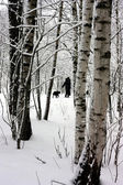 Walk in a winter wood — Stock Photo