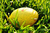 Yellow Easter egg in spring grass — Stock Photo