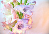 Beautiful gladioluses — Stock Photo
