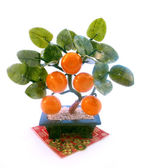East souvenir tangerine tree — Stock Photo