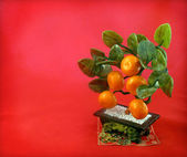Background with East tangerine tree — Stock Photo
