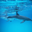 Marine Animals — Stockfoto
