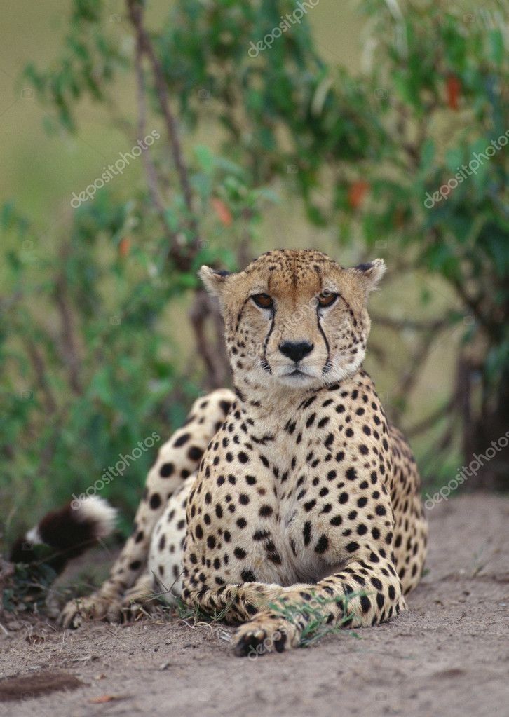 Africa's Wild Animals — Stock Photo #1511863