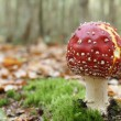Stock Photo: Red stipe toadstool