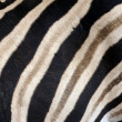 Zebra stripes texture — Stock Photo