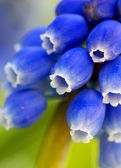 Macro detail of a blue flower — Stock Photo
