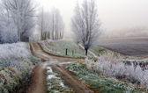 Gorgeous winter landscape — Stock Photo