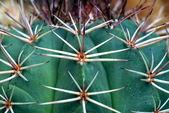 Close-up of a cactus — Stock Photo