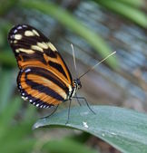 Beautiful butterfly on a leaf — Stock Photo