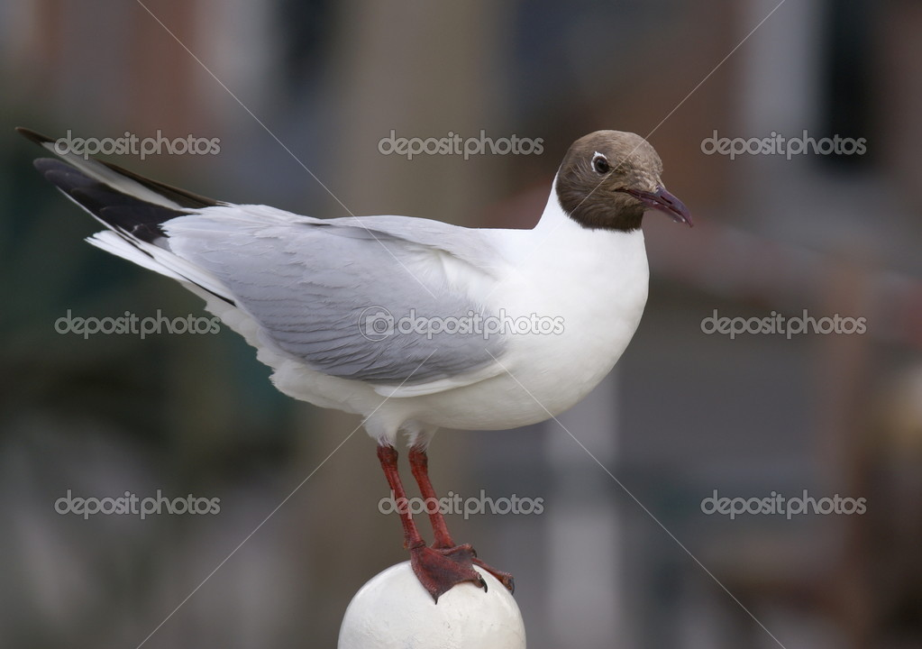 Seabird — Stock Photo #1513068