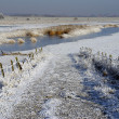 Road to the river in wintertime — Stock Photo