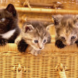 Cute little cats - Stock Photo