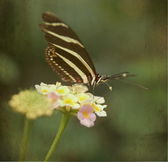 Beautiful butterfly sitting on a flower — Stock Photo