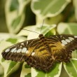 Stock Photo: Butterfly resting on a leaf