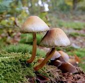 Toadstool / mushroom — Stock Photo