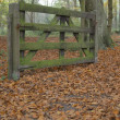 Autumn landscape with a fence - Stock Photo