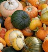 Colorful pumpkins — Stock Photo