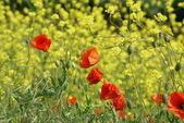 Field with wildflowers — Foto de Stock
