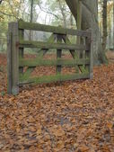 Autumn landscape with a fence — Stock Photo