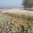 Beautiful winter countryside holland — Stock Photo #2568157