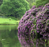 Landscape with purple flowers by the lak — Stock Photo