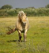 Wild horse — Stock Photo
