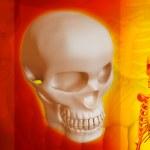 Постер, плакат: Skeleton and human Skull