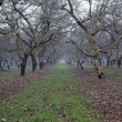 Walnut Groove in winter rain — Stock Photo #1511429
