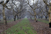 Walnut Groove in winter rain — Stock Photo