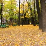 Empty alley in urban park in autumn — Stock Photo