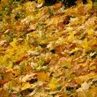 Background from colored autunm leaves — Stock Photo