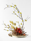 Ikebana on white — Stock Photo