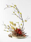 Ikebana on white — Stock Photo