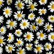Ox-eye daisies — Stock Photo #1555059
