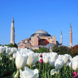 Haghia (Aya) Sophia - Stock Photo