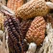 Royalty-Free Stock Photo: Multicolored corn collection