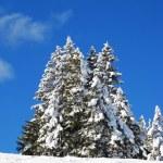 invierno en los Alpes — Foto de Stock   #1525997