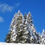 Winter in den Alpen — Stockfoto #1525997