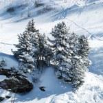 Skiing in swiss alps — Stock Photo