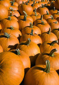 Orange pumpkin collection — Stock Photo