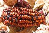 Colored corn — Stock Photo