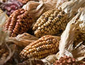 Colorful corn decoration — Stock Photo