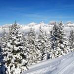 invierno en los Alpes — Foto de Stock   #1561950