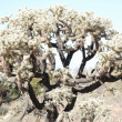 Stock Photo: Arizondesert cactus tree