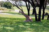 Giraffe Rests In The Shade — Stock fotografie