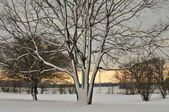 Snowy Tree at Sunset — Stock Photo