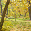 Landscape park in autumn — Stock Photo #1516488