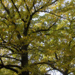 Tree in    autumn - Stock Photo